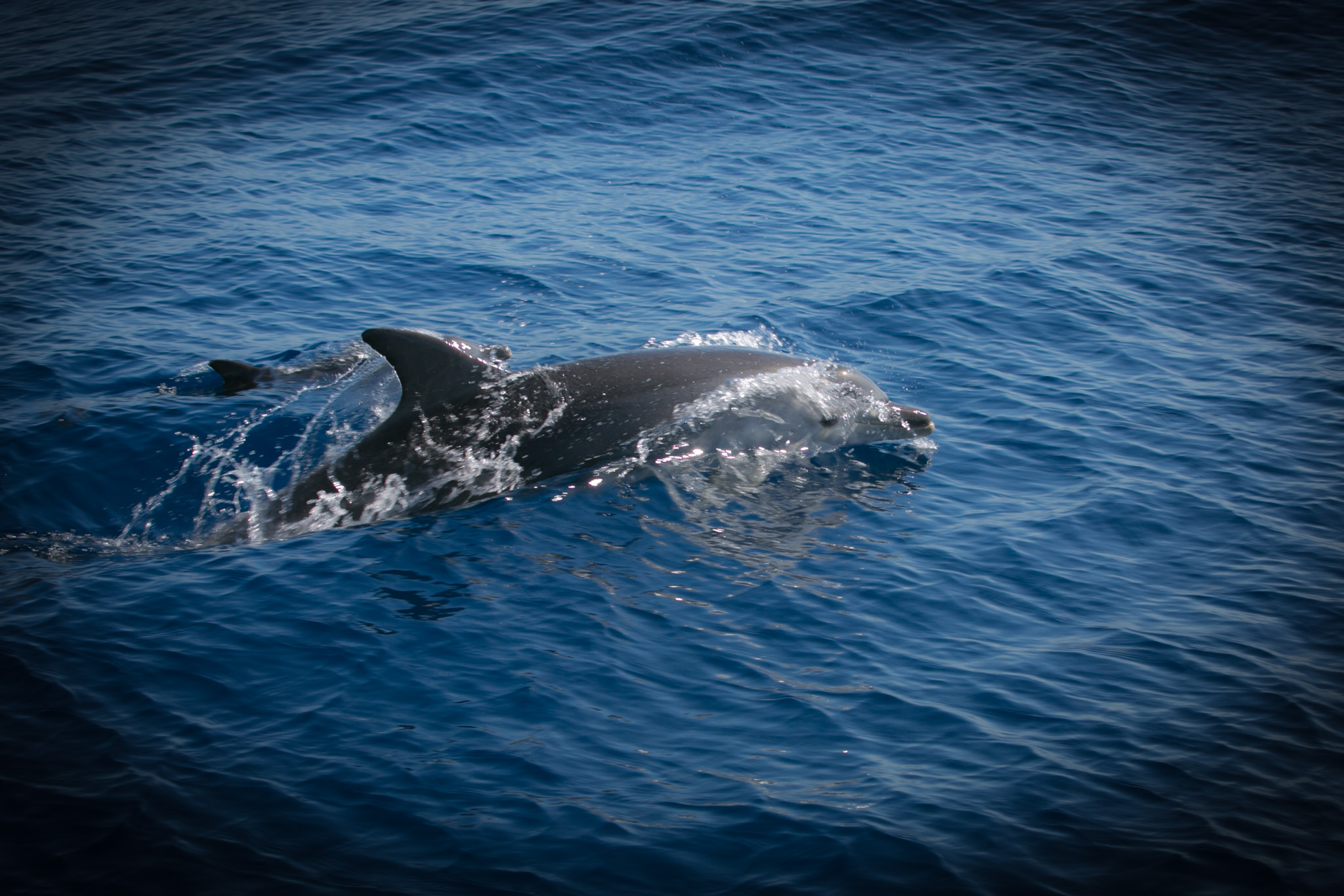 Dolphins: Mum and Calf