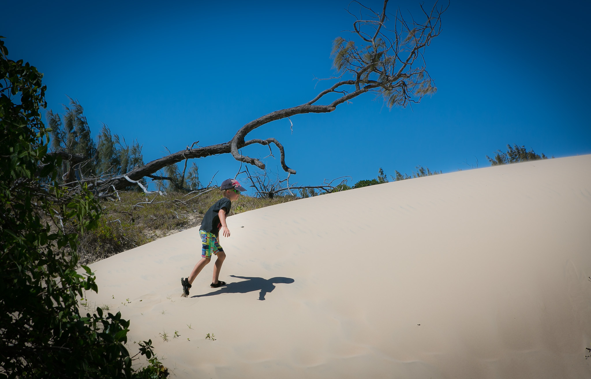 Oscar Conquering another Dune