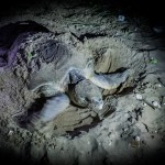 Turtle nesting at Mon Repos Beach