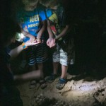 Turtle eggs at Mon Repos